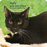 Adopt A Pet :: Suitable SULLY - Monrovia, CA