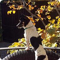 Adopt A Pet :: Diego - Santa Ana, CA