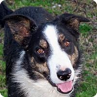 Adopt A Pet :: Boss - Conway, AR