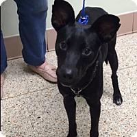 Adopt A Pet :: MICHELLE - Fort Lauderdale, FL