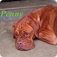 Adopt A Pet :: Penny - El Cajon, CA
