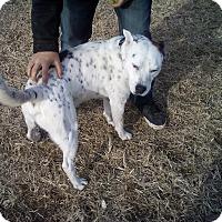 Adopt A Pet :: Troy - Union City, TN