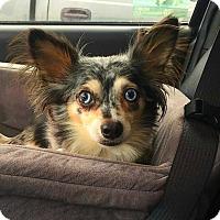 Adopt A Pet :: Taylor - Princeton, MN