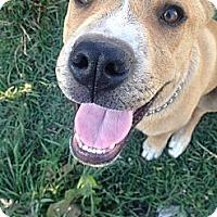 Adopt A Pet :: BOWSER - Torrance, CA