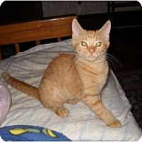 Adopt A Pet :: Pia - Frederick, MD