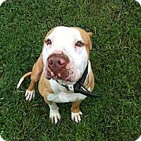 Adopt A Pet :: Romeo - Geismar, LA