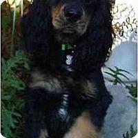 Adopt A Pet :: Merlin - Sugarland, TX