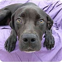 Adopt A Pet :: Gus - Mocksville, NC