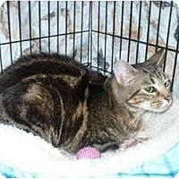 Adopt A Pet :: Swirly Girl - Colmar, PA