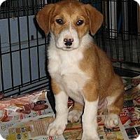 Adopt A Pet :: Casey - Hamilton, ON