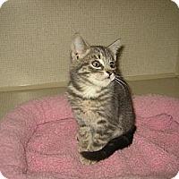 Adopt A Pet :: THEODORE - 2014 - Hamilton, NJ