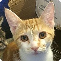 Adopt A Pet :: Whisper - Winchester, CA