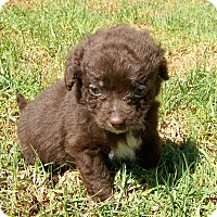 Adopt A Pet :: Robin - La Habra Heights, CA