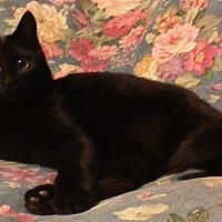 Adopt A Pet :: Jack - Salisbury, NC