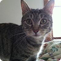Adopt A Pet :: Miracle - Bensalem, PA