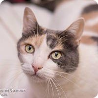 Adopt A Pet :: Lilly - Declawed - Fountain Hills, AZ