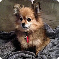 Adopt A Pet :: Teddy - Toronto, ON