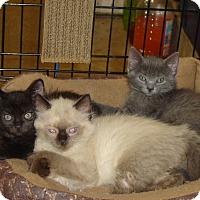 Adopt A Pet :: KD - Mundelein, IL