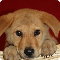 Adopt A Pet :: Matt - Waldorf, MD