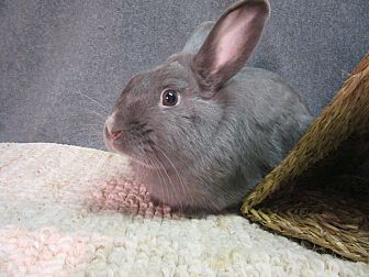Dwarf Mix for adoption in Newport, Delaware - Adrian