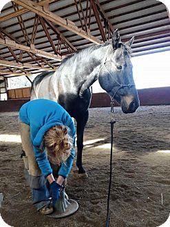 Quarterhorse/Other/Unknown Mix for adoption in Aumsville, Oregon - Angel