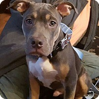 Adopt A Pet :: Dempsey - Framingham, MA