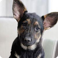 Adopt A Pet :: Rey - Newport Beach, CA