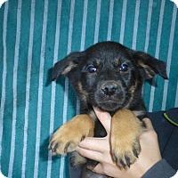 Adopt A Pet :: Melly - Oviedo, FL