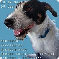 Adopt A Pet :: Sebastian Bach - Houston, TX