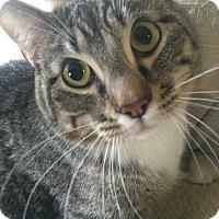 Adopt A Pet :: Buck - St. Louis, MO