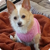 Adopt A Pet :: Reggie - Huntsville, AL