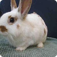 Adopt A Pet :: *TRIXIE - Upper Marlboro, MD