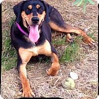 Adopt A Pet :: Lula Bell - Johnson City, TX
