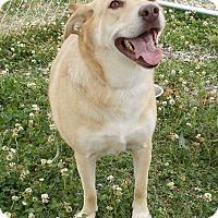 Adopt A Pet :: Sunshine - Lewisburg, TN