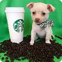 Adopt A Pet :: Biscotti - Irvine, CA
