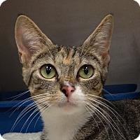 Adopt A Pet :: B-6 - Triadelphia, WV