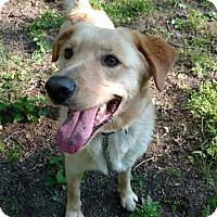 Adopt A Pet :: Ben - Capon Bridge, WV