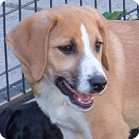 Adopt A Pet :: Rusty - Elmwood Park, NJ