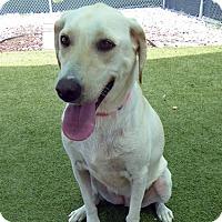 Adopt A Pet :: Roxie - Towson, MD