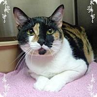 Adopt A Pet :: MISS KITTY - Marietta, GA