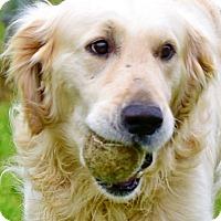 Adopt A Pet :: Patrick - New Canaan, CT