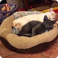 Adopt A Pet :: Sansi - Toronto, ON