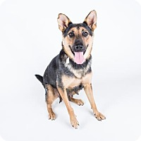 German Shepherd Dog Mix Dog for adoption in Decatur, Georgia - Dawn-Adopted