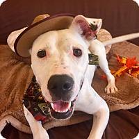 Adopt A Pet :: Stuart - Flint, MI