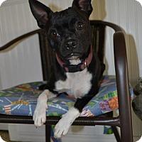 Adopt A Pet :: Princess - Deerfield Beach, FL