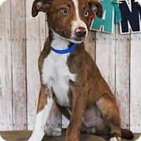 Adopt A Pet :: Emmit - Waldorf, MD