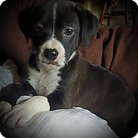 Adopt A Pet :: Zoey - Cleveland, OH