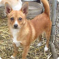 Adopt A Pet :: Copper - Godley, TX