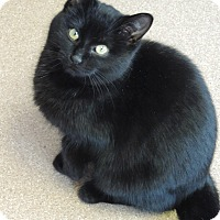 Adopt A Pet :: Poinsettia - Brookings, SD