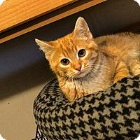 Adopt A Pet :: Twinkie - Hanna City, IL